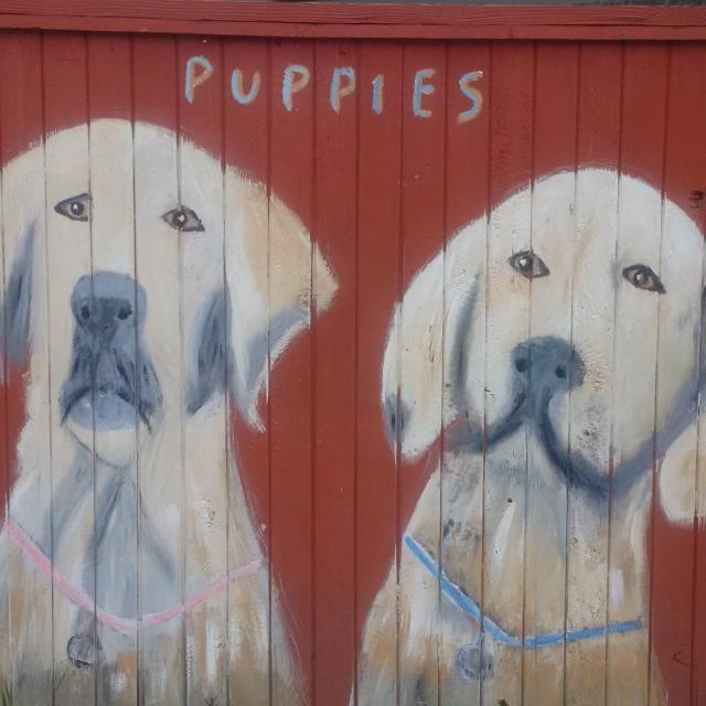 puppies on fence