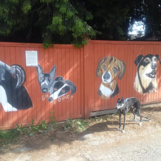 progress on fence
